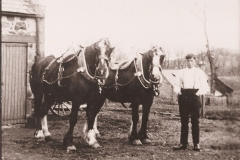 39-man-with-hands-in-pocket-with-two-horses-in-show-harness