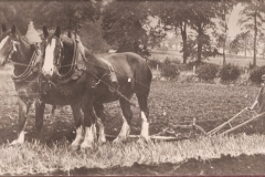 50-Ploughing-with-two-horses