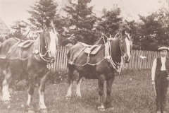 51-boy-with-two-horses-in-show-harness