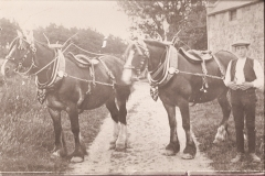 54-Boy-with-two-horses-in-show-harness