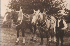 56-William-Campbell-Wm-Campbell-sen-with-pair-of-horses-and-show-harness