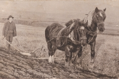 61-man-and-two-horses-ploughing
